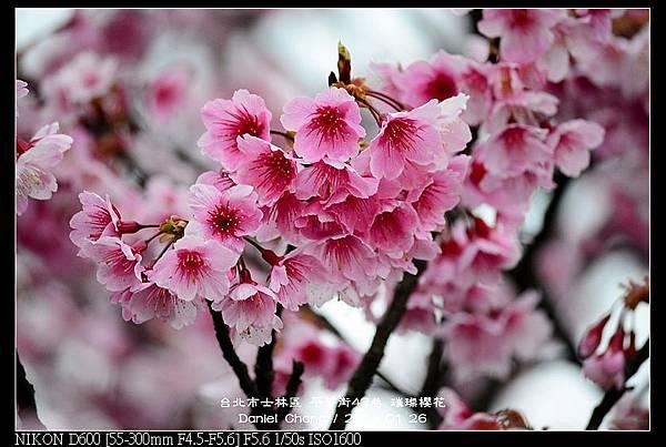 nEO_IMG_140126--Cherry blossom 040-800.jpg