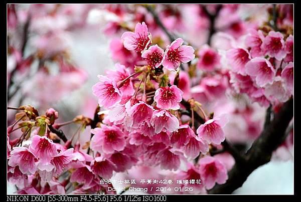 nEO_IMG_140126--Cherry blossom 054-800.jpg