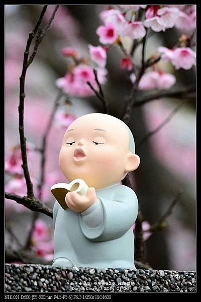nEO_IMG_140126--Cherry blossom 117-800.jpg