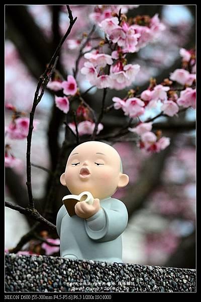 nEO_IMG_140126--Cherry blossom 118-800.jpg