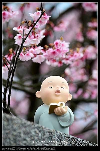 nEO_IMG_140126--Cherry blossom 124-800.jpg