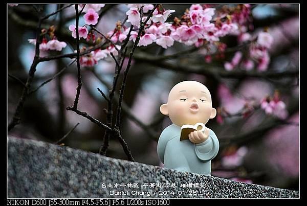nEO_IMG_140126--Cherry blossom 137-800.jpg