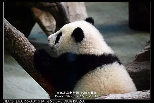 nEO_IMG_140131--Panda Yuanzai 025-800.jpg