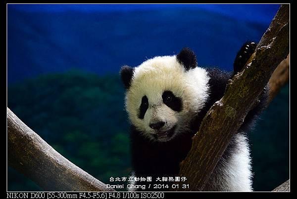 nEO_IMG_140131--Panda Yuanzai 029-800.jpg