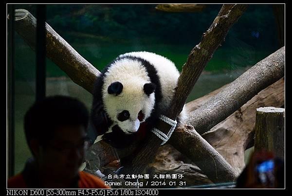 nEO_IMG_140131--Panda Yuanzai 055-800.jpg