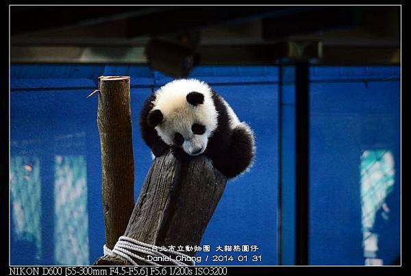 nEO_IMG_140131--Panda Yuanzai 183-800.jpg