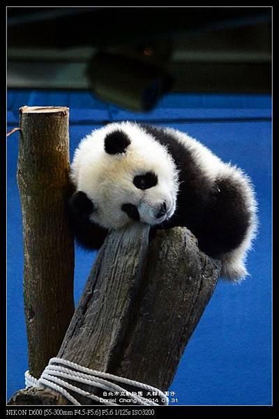nEO_IMG_140131--Panda Yuanzai 258-800.jpg