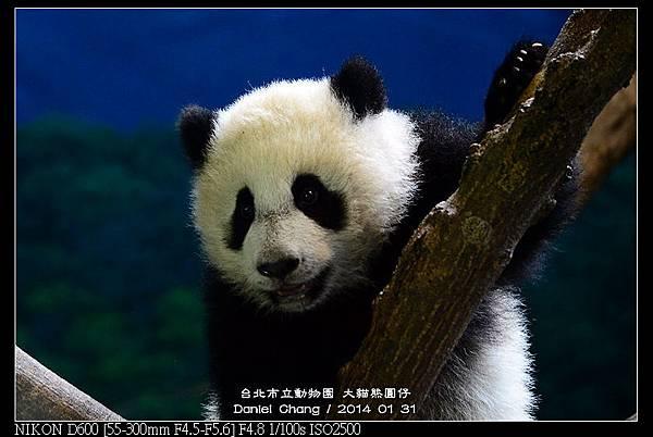 nEO_IMG_140131--Panda Yuanzai 263-800.jpg