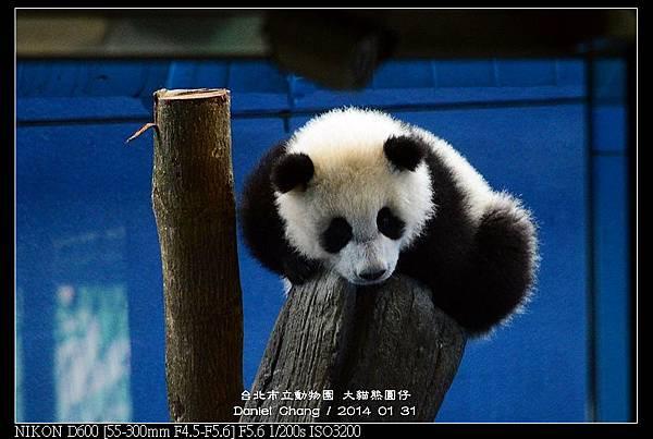 nEO_IMG_140131--Panda Yuanzai 267-800.jpg