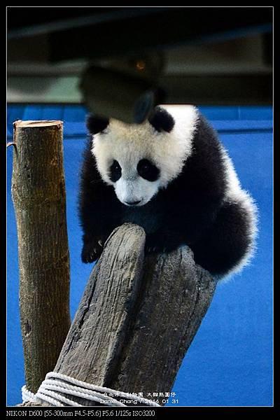 nEO_IMG_140131--Panda Yuanzai 272-800.jpg