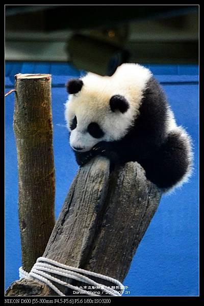 nEO_IMG_140131--Panda Yuanzai 273-800.jpg