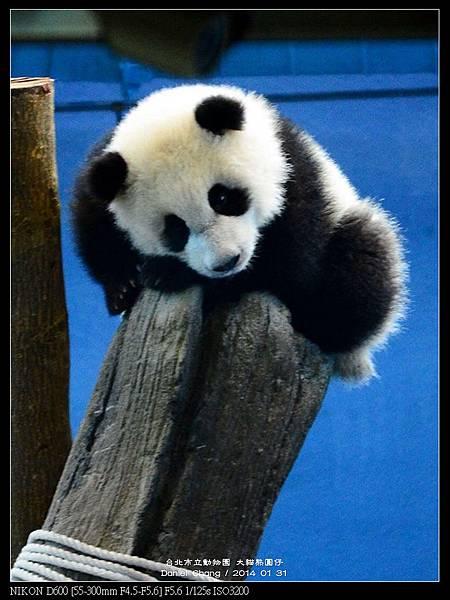 nEO_IMG_140131--Panda Yuanzai 279-800.jpg