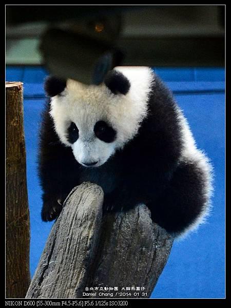 nEO_IMG_140131--Panda Yuanzai 292-800.jpg