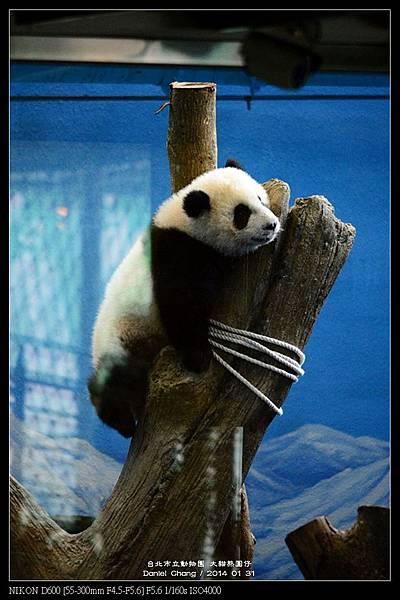 nEO_IMG_140131--Panda Yuanzai 335-800.jpg
