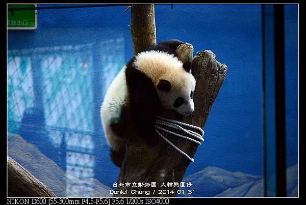 nEO_IMG_140131--Panda Yuanzai 340-800.jpg