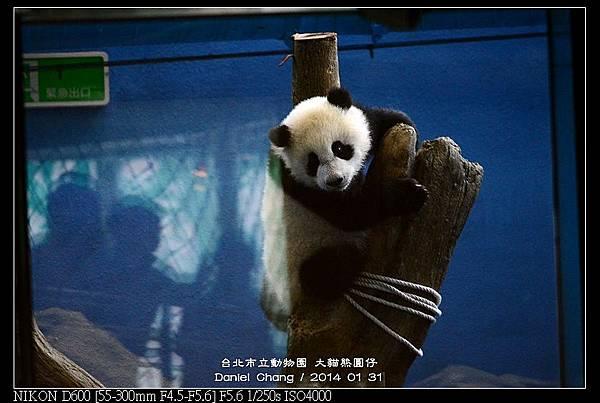 nEO_IMG_140131--Panda Yuanzai 342-800.jpg