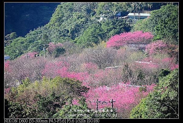 nEO_IMG_140201--YMS Cherry Blossoms 004-800.jpg
