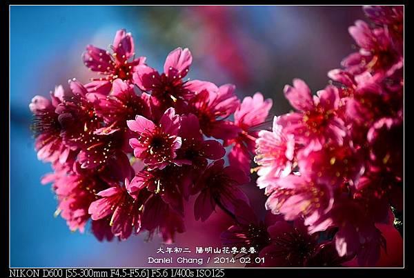 nEO_IMG_140201--YMS Cherry Blossoms 019-800.jpg