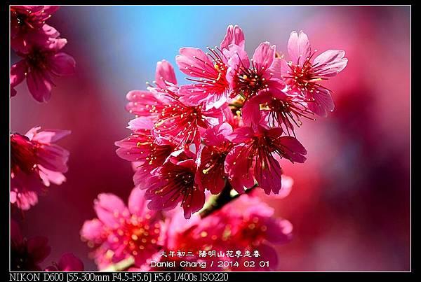 nEO_IMG_140201--YMS Cherry Blossoms 023-800.jpg