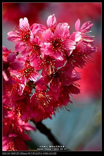 nEO_IMG_140201--YMS Cherry Blossoms 031-800.jpg