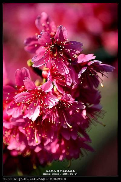 nEO_IMG_140201--YMS Cherry Blossoms 042-800.jpg