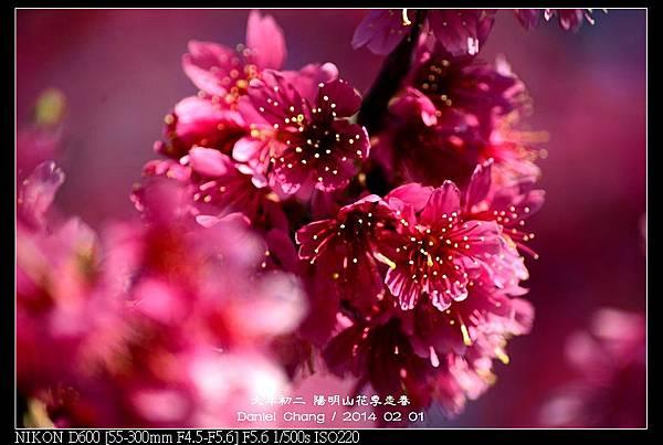 nEO_IMG_140201--YMS Cherry Blossoms 044-800.jpg