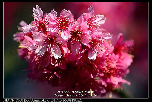 nEO_IMG_140201--YMS Cherry Blossoms 047-800.jpg