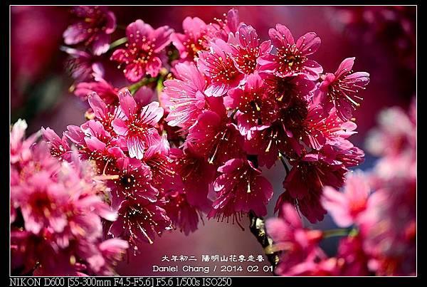 nEO_IMG_140201--YMS Cherry Blossoms 049-800.jpg