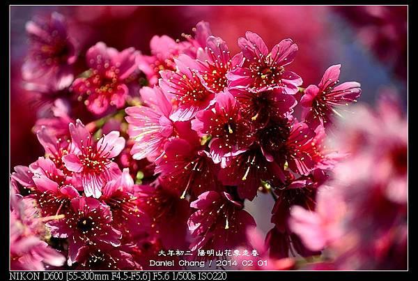 nEO_IMG_140201--YMS Cherry Blossoms 051-800.jpg