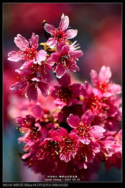 nEO_IMG_140201--YMS Cherry Blossoms 055-800.jpg