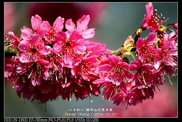 nEO_IMG_140201--YMS Cherry Blossoms 056-800.jpg