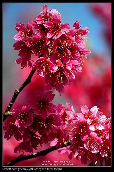 nEO_IMG_140201--YMS Cherry Blossoms 058-800.jpg