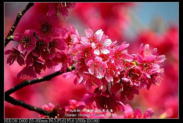 nEO_IMG_140201--YMS Cherry Blossoms 060-800.jpg