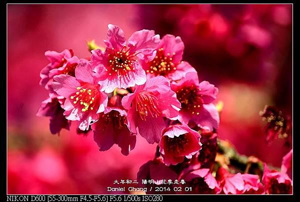 nEO_IMG_140201--YMS Cherry Blossoms 068-800.jpg
