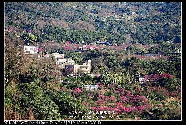 nEO_IMG_140201--YMS Cherry Blossoms 077-800.jpg
