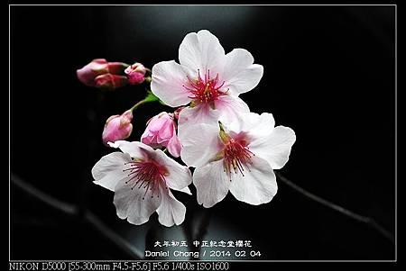 nEO_IMG_140204--CKS Cherry Blossoms 005-800.jpg