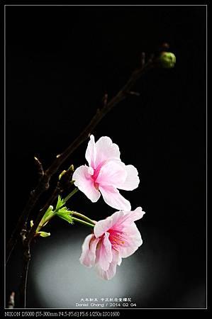 nEO_IMG_140204--CKS Cherry Blossoms 009-800.jpg