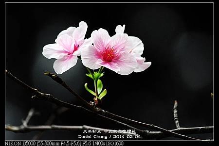 nEO_IMG_140204--CKS Cherry Blossoms 010-800.jpg