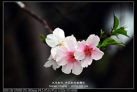 nEO_IMG_140204--CKS Cherry Blossoms 017-800.jpg