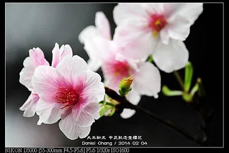 nEO_IMG_140204--CKS Cherry Blossoms 041-800.jpg