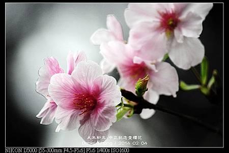 nEO_IMG_140204--CKS Cherry Blossoms 042-800.jpg