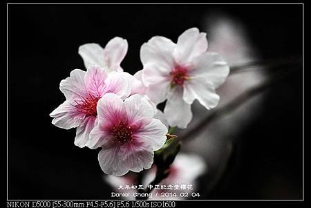 nEO_IMG_140204--CKS Cherry Blossoms 056-800.jpg