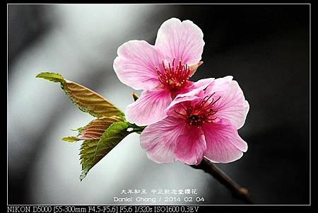 nEO_IMG_140204--CKS Cherry Blossoms 065-800.jpg