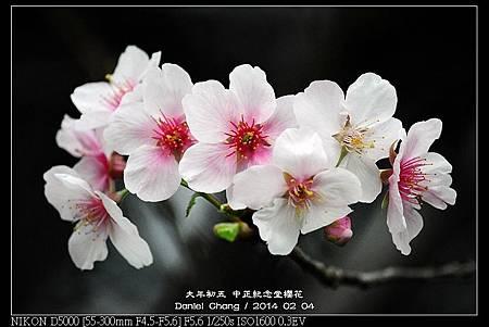 nEO_IMG_140204--CKS Cherry Blossoms 070-800.jpg