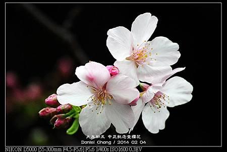 nEO_IMG_140204--CKS Cherry Blossoms 084-800.jpg