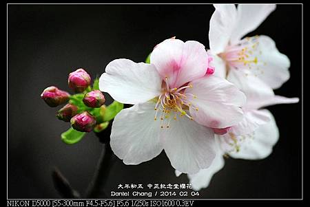 nEO_IMG_140204--CKS Cherry Blossoms 094-800.jpg