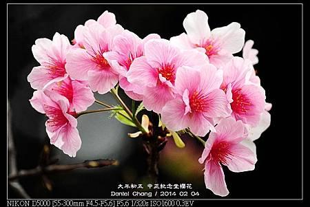 nEO_IMG_140204--CKS Cherry Blossoms 101-800.jpg