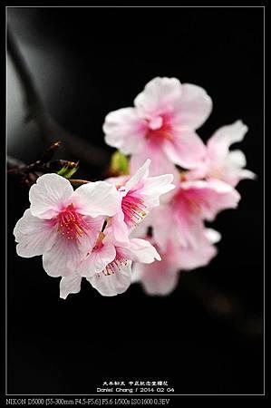 nEO_IMG_140204--CKS Cherry Blossoms 108-800.jpg