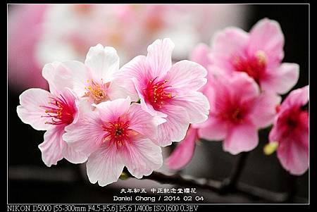 nEO_IMG_140204--CKS Cherry Blossoms 112-800.jpg