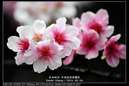 nEO_IMG_140204--CKS Cherry Blossoms 124-800.jpg